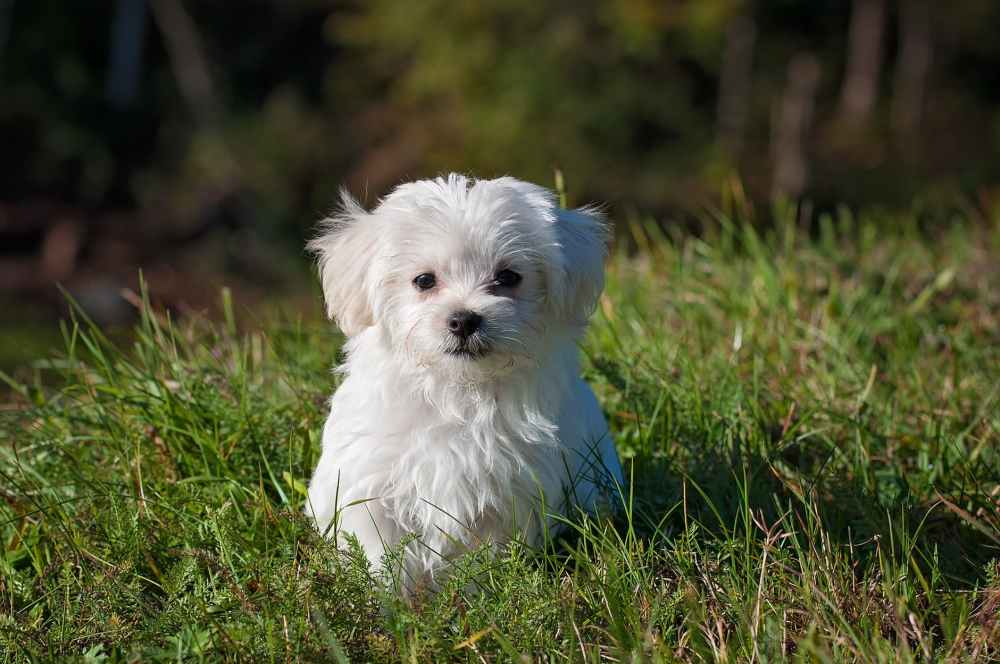 nature animal dog pet