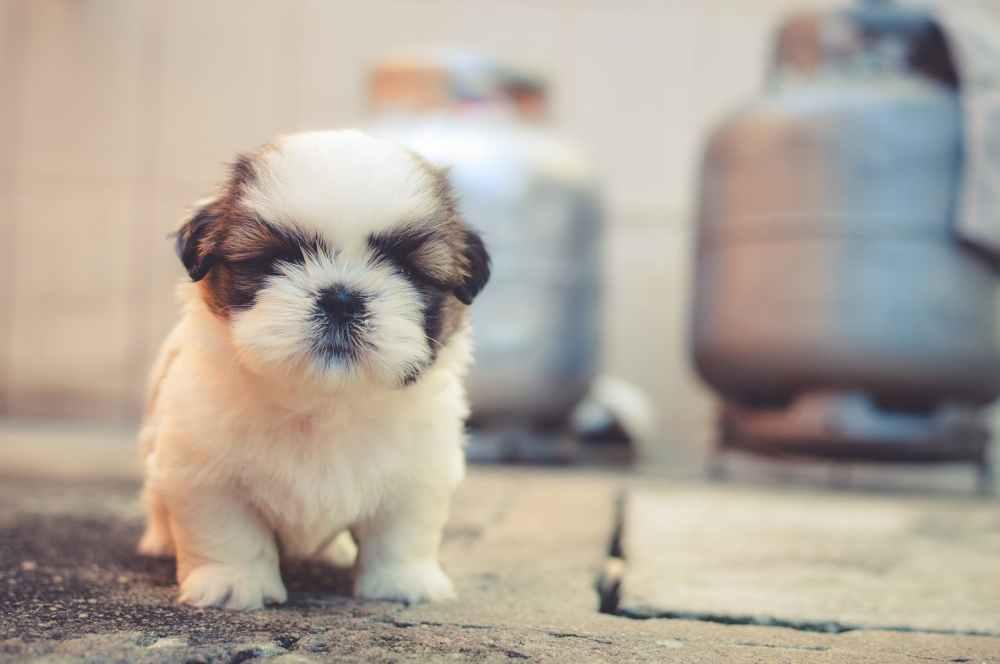 dog tough small puppy
