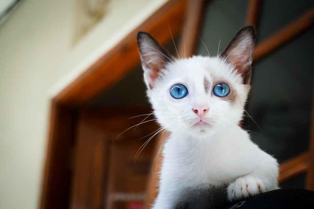 close up photography of white kitten